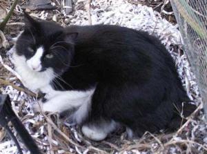 Modern Hatching Cat