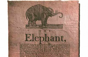 The first elephant in America