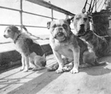 Dogs on the Titanic