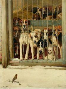 Chelmsford dog kennels