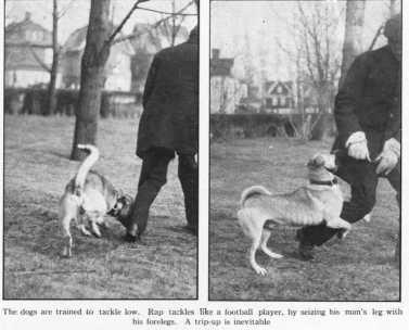 Parkville police dog in training