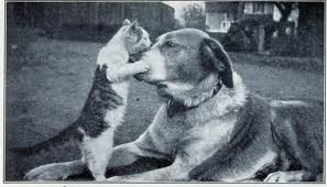 Chelmsford Stock Farm cat and dog