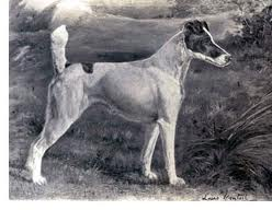 Ch. Warren Remedy smooth fox terrier