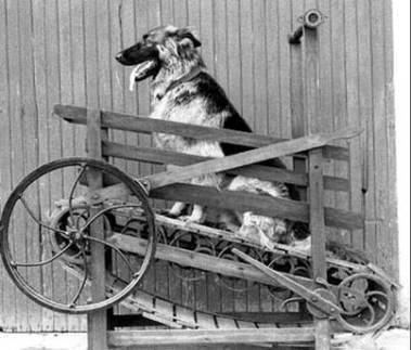 Dog treadmil, dog engine