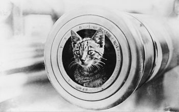 Ship mascot cat