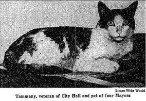 Tammany, mascot cat of City Hall