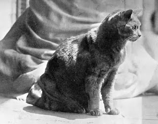 Tom mascot cat Maine