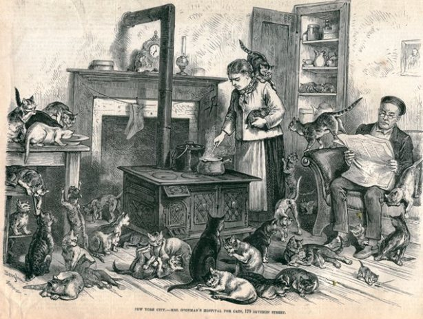 Mrs. Goodman's Hospital for Cats