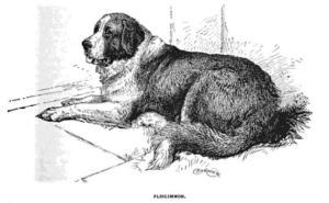 Plinlimmon, champion dog of J.K. Emmet