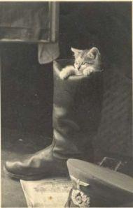 Kitten in police boot