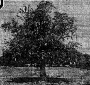 Brian Hughes Tree