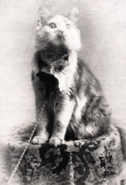 Cosey, Best in Show, 1895