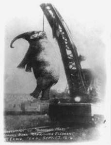 Erwin, Tennessee, elephant hanging