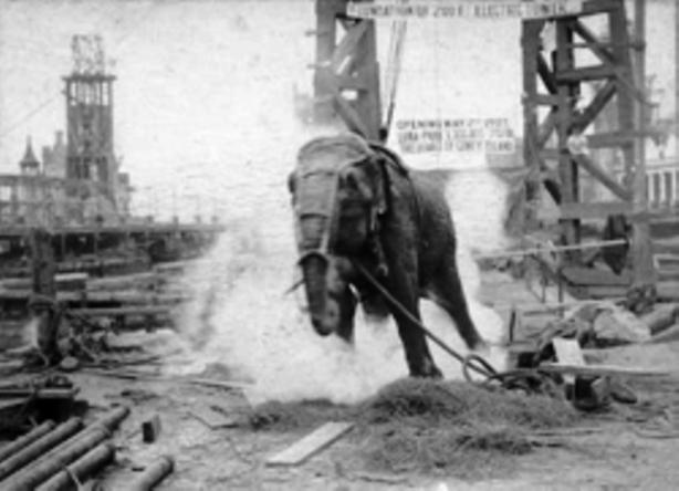 Topsy elephant execution