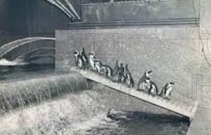 Penguins at Rockefeller Center