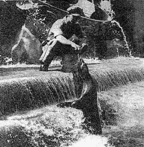 Sea Lion Prometheus Fountain
