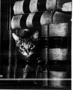 Kitty Hall stowaway cat