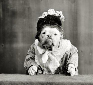 Uno cross-dressing dog