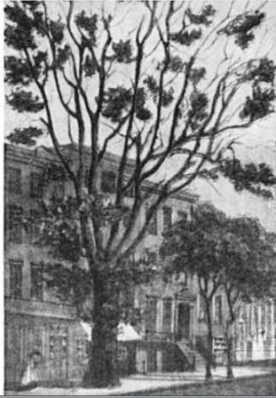 The Varian Homestead Tree