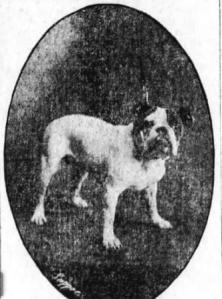Yankee Stone bulldog